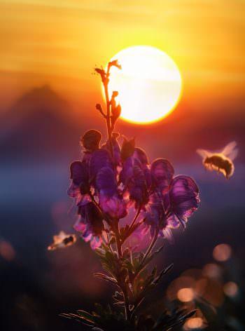 Anmeldung – Bienen und Landwirtschaft | Prof. Dr. Werner von der Ohe, Leiter des Celler Instituts für Bienenkunde